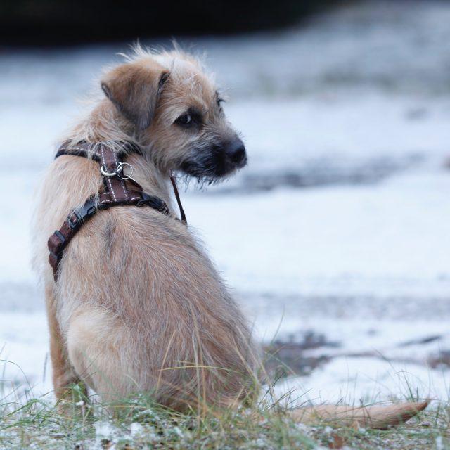 Dzie kundelka witujemy z naszym Rykiem famfara pies kundel adoptujpsahellip